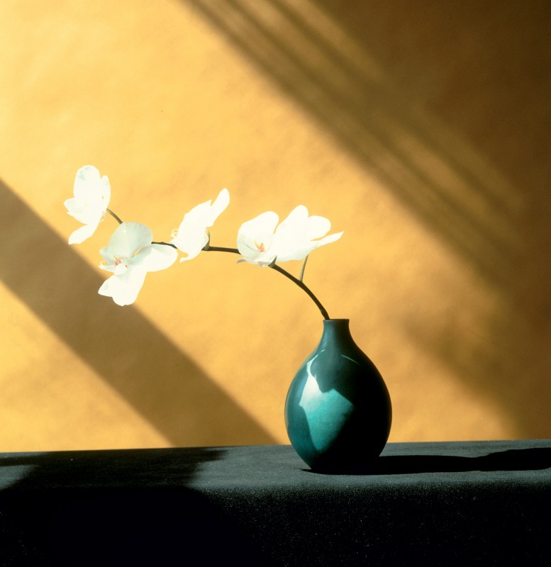 Orchid, 1982